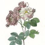 Στον κήπο της αυτοκράτειρας Ιωσηφίνας, συζύγου του Ναπολέοντα