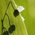 Εβδομαδιαία Ανασκόπηση: Απροσδόκητα & Επιθυμητά