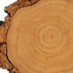 Ξύλο Κασμίρ ή Cashmeran: το ξανθό ξύλο της αρωματοποιίας
