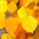 Aρώματα του φθινοπώρου
