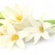 La Perla Private Collection: Lotus Shadow, Contemporary Tuberose and White Iris