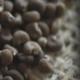 Αμπρέτ ή Μόσχος Φυτικής Προέλευσης: Ένα Ευγενές Συστατικό