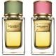 Velvet Rose και Velvet Bergamot από Dolce & Gabbana